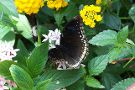 The Original Mackinac Island Butterfly House & Insect World